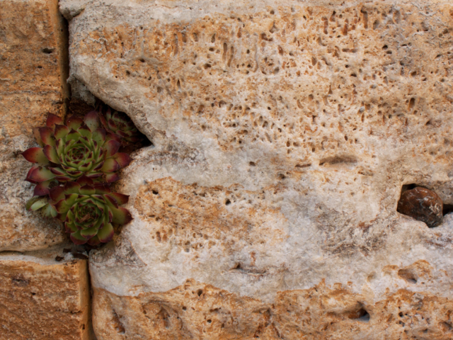 Travertin Ordon Gold Fine Line - Systemmauer